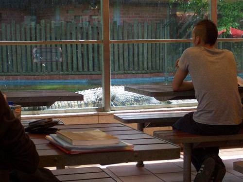 Crocodilos ao lado do McDonald's, no Zoológico de Lisboa
