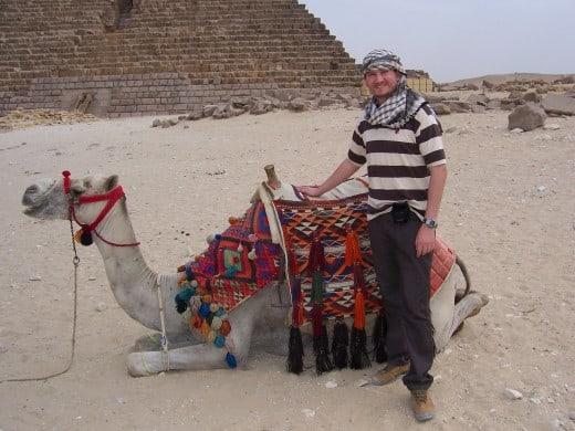 Não ajude a explorar os animais no Egito e em Marrocos
