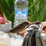 Hotel em Marrakech: café-da-manhã na companhia de pássaros