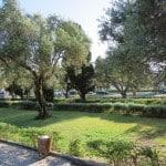 Azeitonas e oliveiras em Portugal