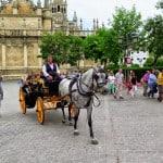 Não ajude a explorar os cavalos em Sevilha