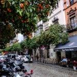 Laranjeiras nas ruas de Sevilha encantam os turistas