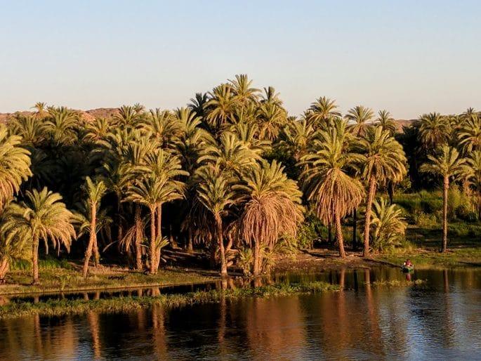 Tâmaras e tamareiras no Egito
