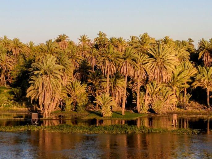 Cruzeiro no Rio Nilo | Tamareiras