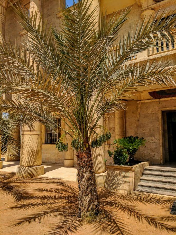 Uma tamareira no Egito